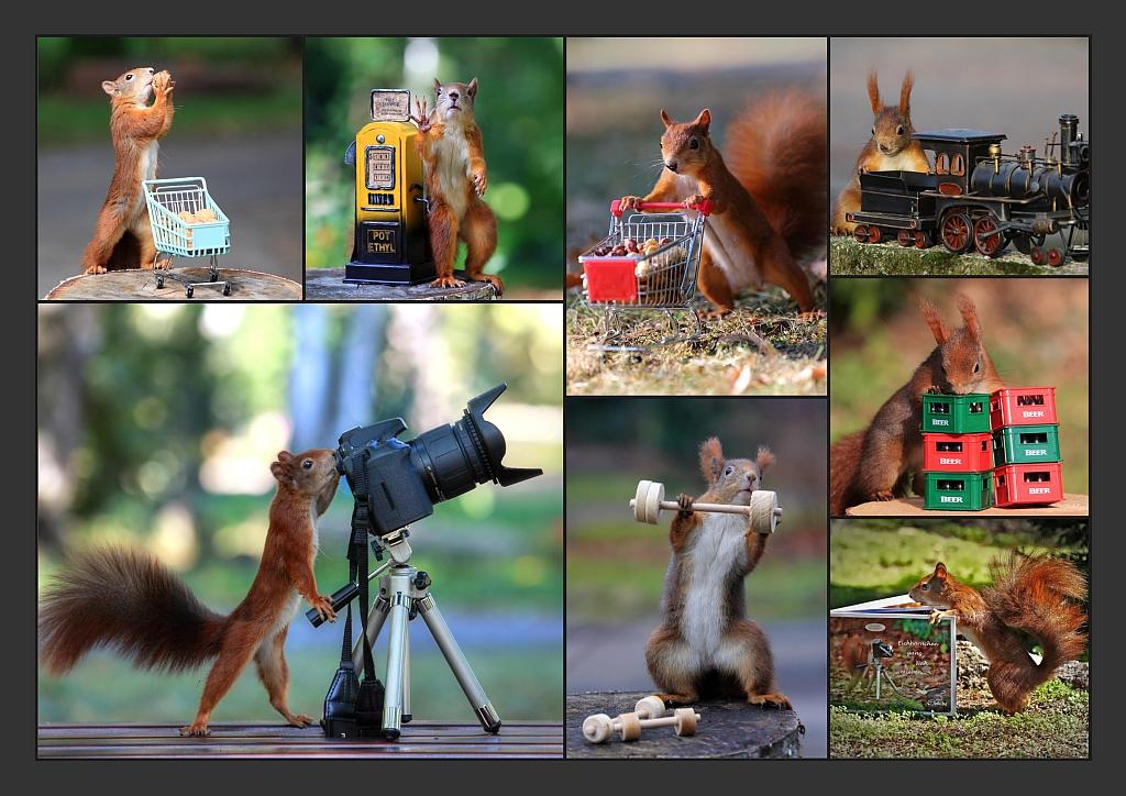 Eichhörnchen Collage