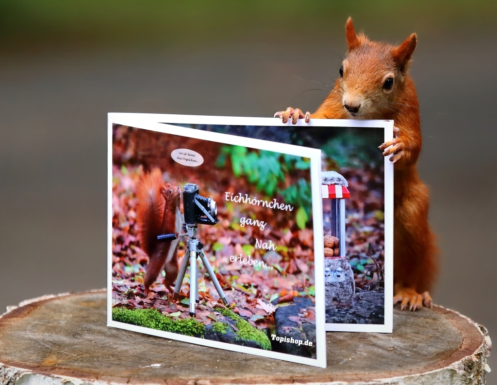 Eichhörnchen Buch