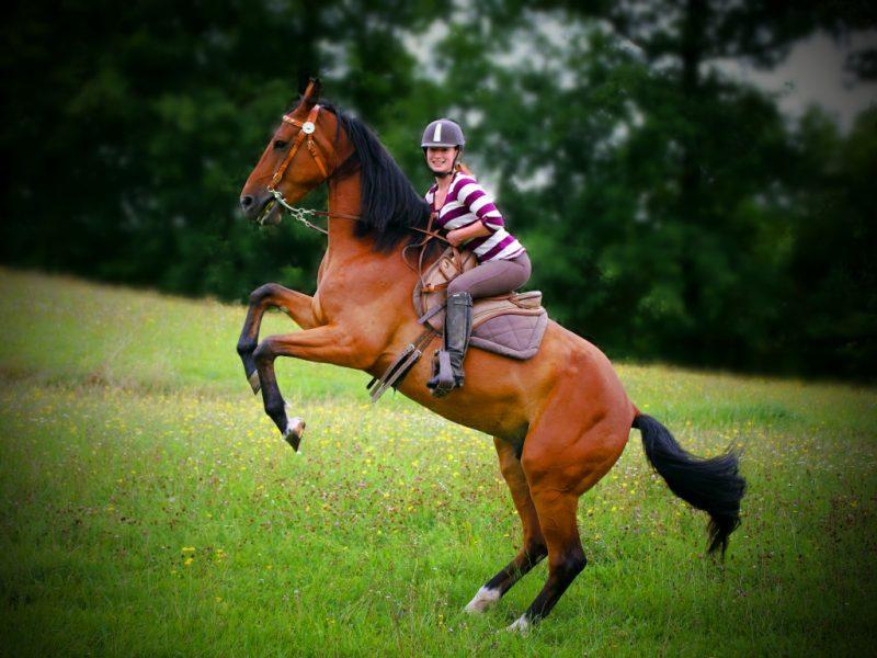 Anbebot Pferdeshooting